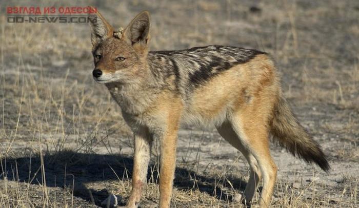 В Одесской области произошло нападение дикого зверя на человека