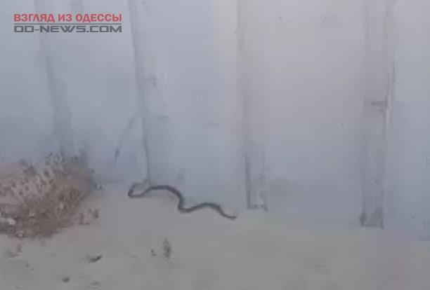 Под Одессой отдыхающие напуганы количеством пресмыкающихся