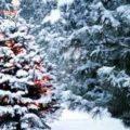 В Одессе возможен снег и отмечается существенное похолодание